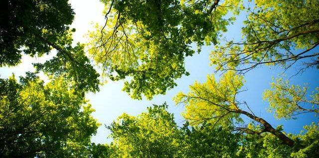 Bomen planten